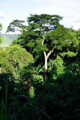 Congo fev2013 20130203_154525
