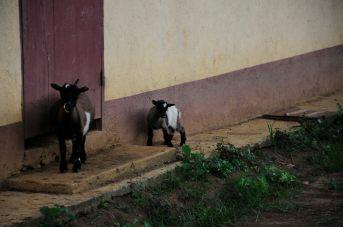 Congo fev2013 20130205_164607
