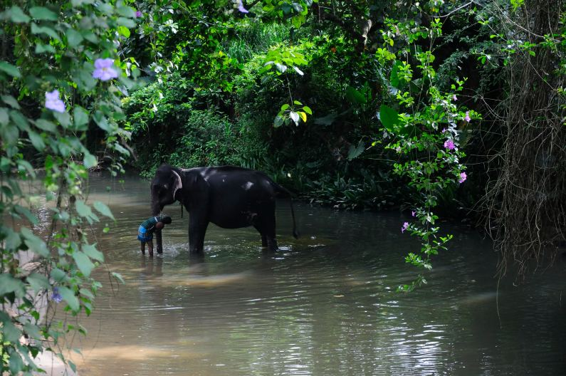 Elephant in the river - Millennium Elephant Foundation, Pinnawala