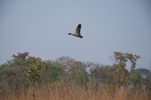 Angola set2011 1805