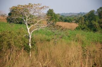 A descer para o rio Sombo